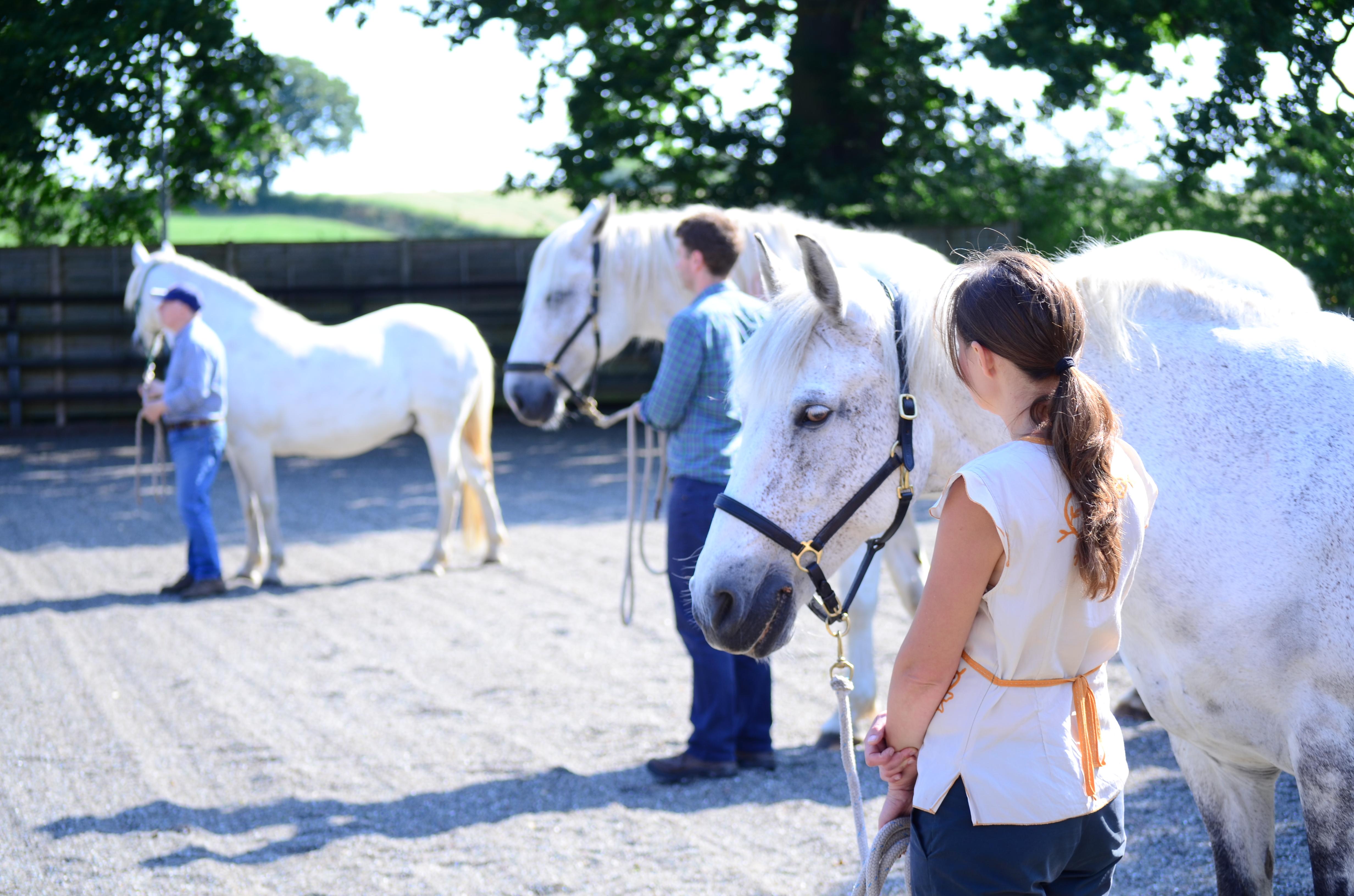 Horses4Change - Leadership Development